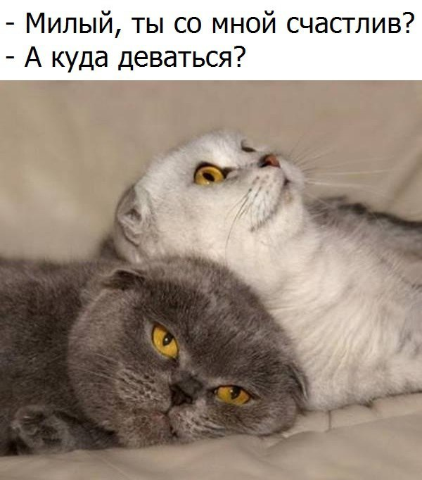 http://sg.uploads.ru/t/BVgAU.jpg