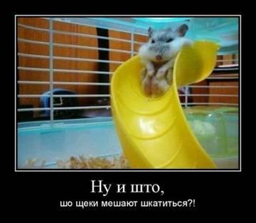 http://sg.uploads.ru/t/CENPI.jpg