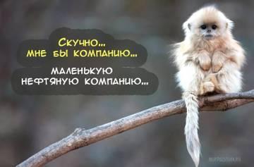 http://sg.uploads.ru/t/CHEkj.jpg