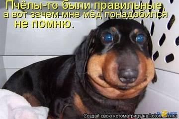 http://sg.uploads.ru/t/ECvKw.jpg