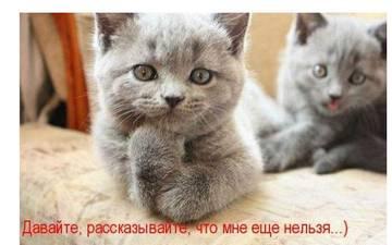 http://sg.uploads.ru/t/EfAZM.jpg