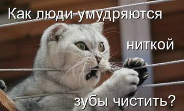 http://sg.uploads.ru/t/EuxUj.jpg