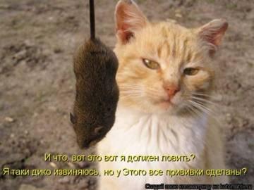 http://sg.uploads.ru/t/FTQHY.jpg