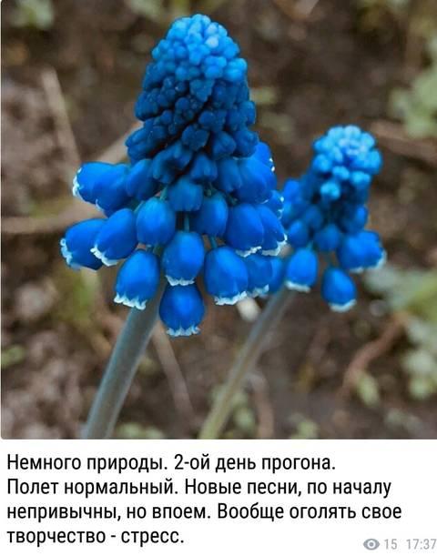 http://sg.uploads.ru/t/GO0vU.jpg