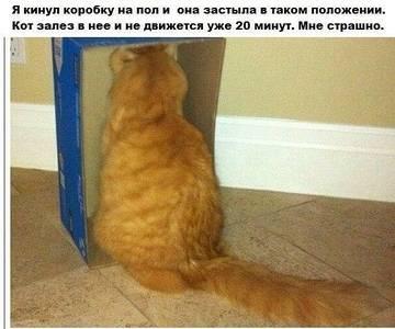 http://sg.uploads.ru/t/GVbZd.jpg