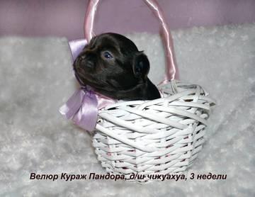 http://sg.uploads.ru/t/HndUp.jpg