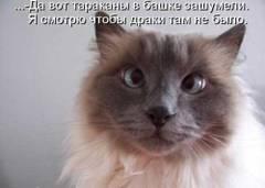 http://sg.uploads.ru/t/I5VOx.jpg
