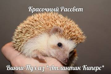 http://sg.uploads.ru/t/Id8sl.jpg