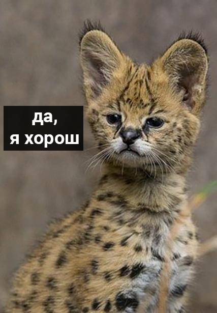 http://sg.uploads.ru/t/Iyjow.jpg