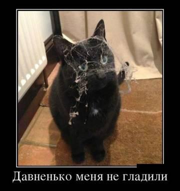 http://sg.uploads.ru/t/K25GN.jpg