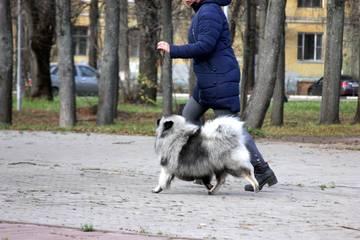 http://sg.uploads.ru/t/KQdnt.jpg
