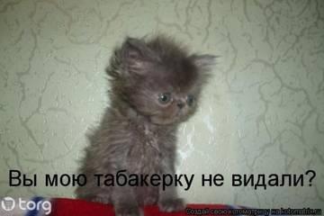 http://sg.uploads.ru/t/KRnp3.jpg