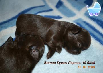 http://sg.uploads.ru/t/KUIvS.jpg