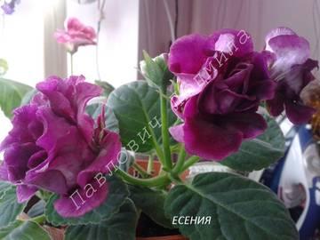 http://sg.uploads.ru/t/LAphN.jpg
