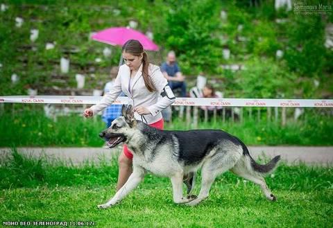 http://sg.uploads.ru/t/Lf8PG.jpg