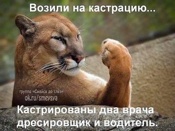 http://sg.uploads.ru/t/M8bdy.jpg
