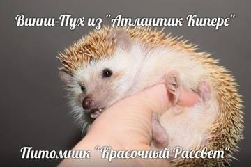 http://sg.uploads.ru/t/MKySl.jpg