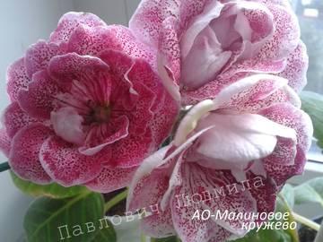 http://sg.uploads.ru/t/MWPgr.jpg