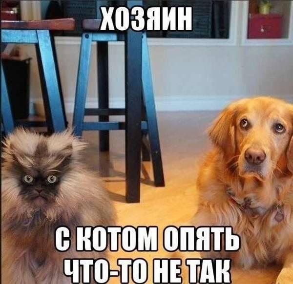 http://sg.uploads.ru/t/NG86o.jpg