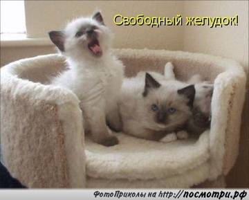 http://sg.uploads.ru/t/NjFz3.jpg