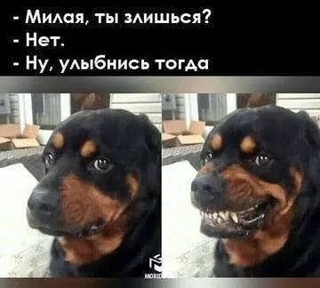 http://sg.uploads.ru/t/Nsakg.jpg