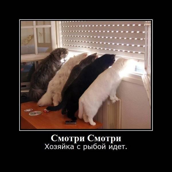 http://sg.uploads.ru/t/OQjVa.jpg