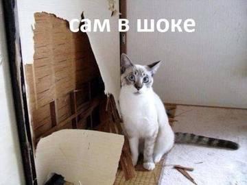 http://sg.uploads.ru/t/PGWvK.jpg