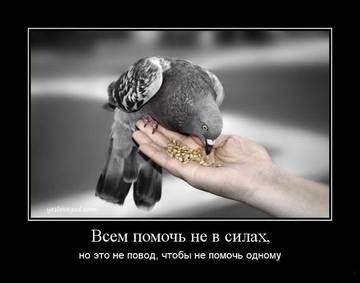 http://sg.uploads.ru/t/QHGr4.jpg