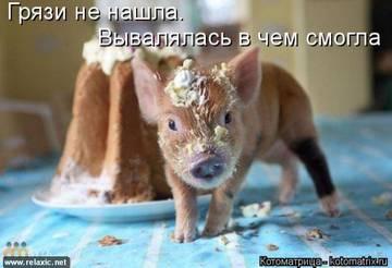 http://sg.uploads.ru/t/RDq1J.jpg