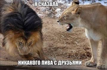 http://sg.uploads.ru/t/SZ76q.jpg