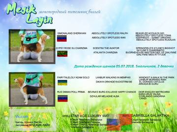 http://sg.uploads.ru/t/TEChL.jpg