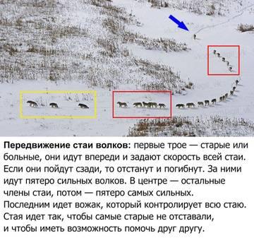http://sg.uploads.ru/t/TPEU1.jpg