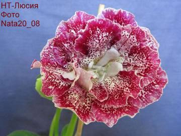 http://sg.uploads.ru/t/TXmpw.jpg
