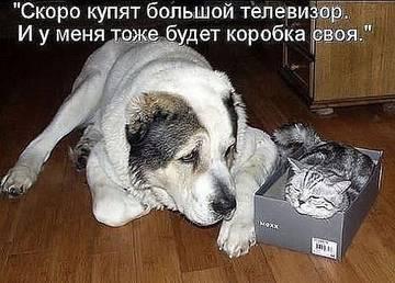 http://sg.uploads.ru/t/TqzjK.jpg