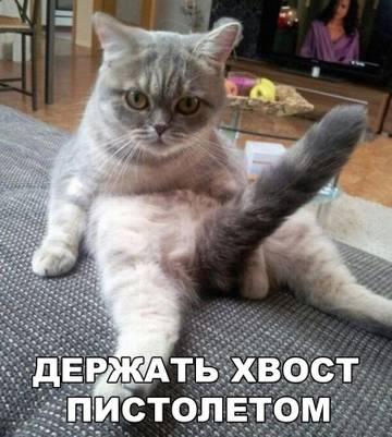 http://sg.uploads.ru/t/Ttpdy.jpg