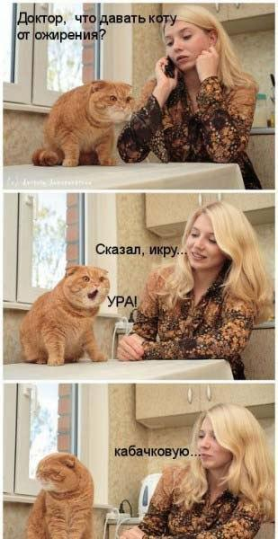 http://sg.uploads.ru/t/U6qoy.jpg