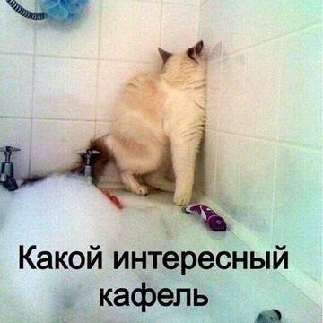 http://sg.uploads.ru/t/VKdDG.jpg
