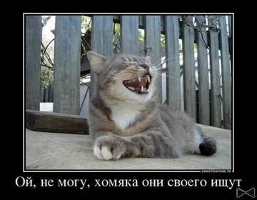http://sg.uploads.ru/t/VQNT3.jpg