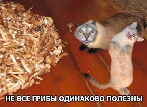 http://sg.uploads.ru/t/VbYhC.jpg