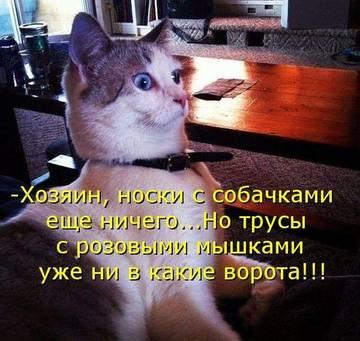 http://sg.uploads.ru/t/VjXCf.jpg