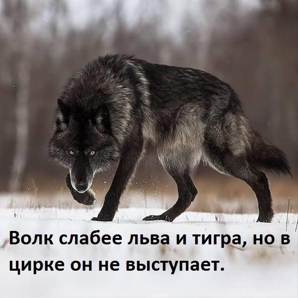 http://sg.uploads.ru/t/WKc5w.jpg