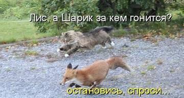 http://sg.uploads.ru/t/WxAnu.jpg