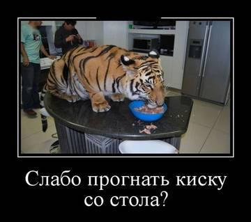 http://sg.uploads.ru/t/Xb8a7.jpg