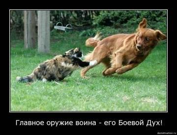http://sg.uploads.ru/t/YN5sU.jpg