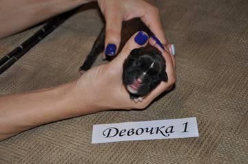 http://sg.uploads.ru/t/YRk8v.jpg