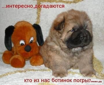 http://sg.uploads.ru/t/YpK7O.jpg