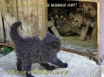 http://sg.uploads.ru/t/ZKAU3.jpg