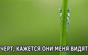 http://sg.uploads.ru/t/ZN85d.jpg