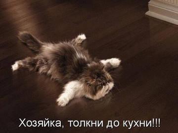 http://sg.uploads.ru/t/ahcJX.jpg