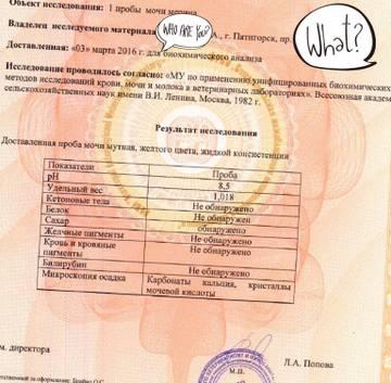http://sg.uploads.ru/t/amrjw.jpg